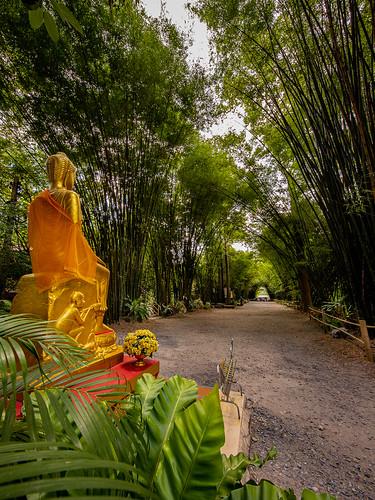 nakhonnayok thailand bamboo tunnel wat chlabhorn wanaram