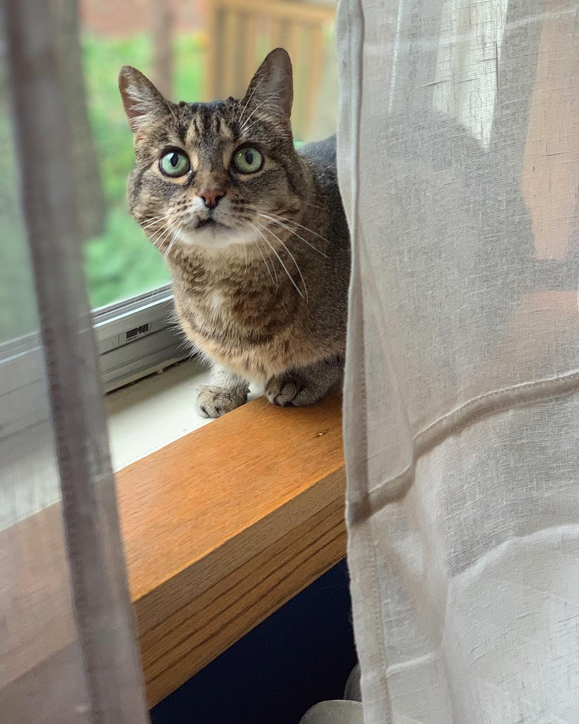 Olive the cat, checking out all the new and exciting window sills