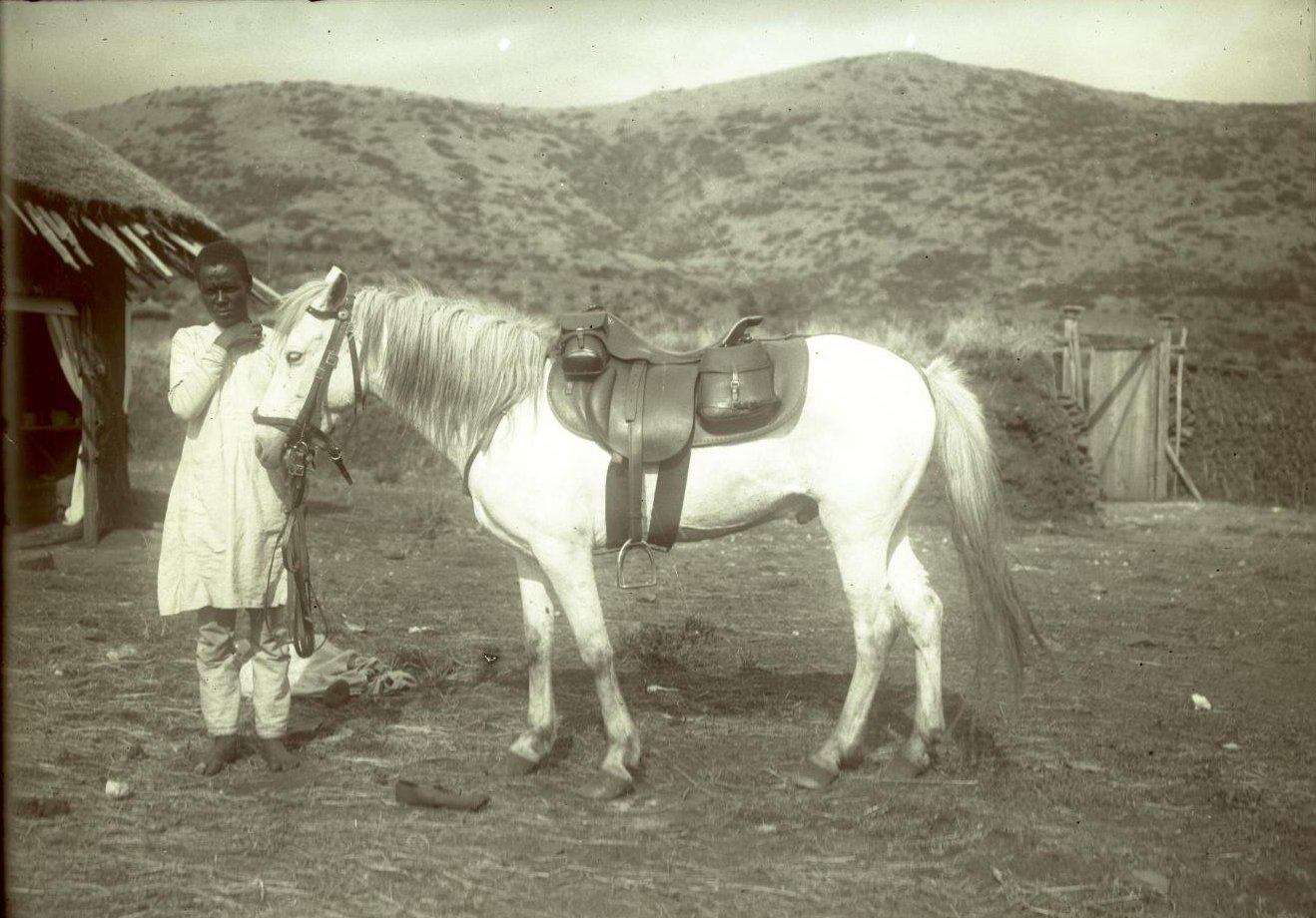 315. 1899. Абиссиния. г. Аддис-Абеба. Лошадь врача Давыдова