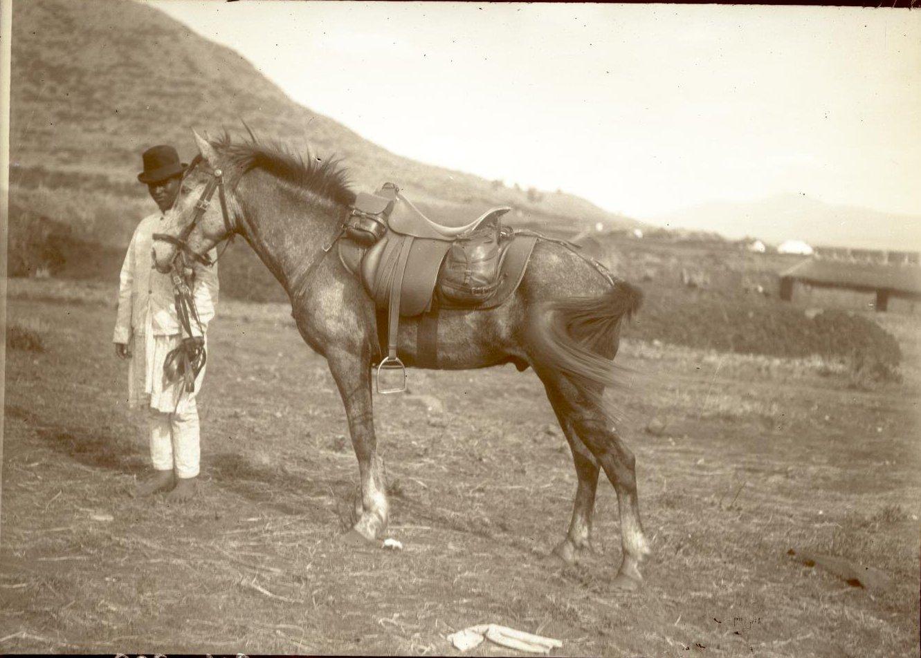 316. 1899. Абиссиния. г. Аддис-Абеба. Лошадь врача Драгомирова