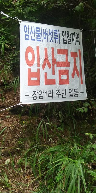백로, 송이시즌의 시작