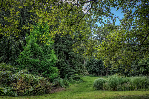 nature park walk hike outdoor trees summer green scenic landscape hartsbrook