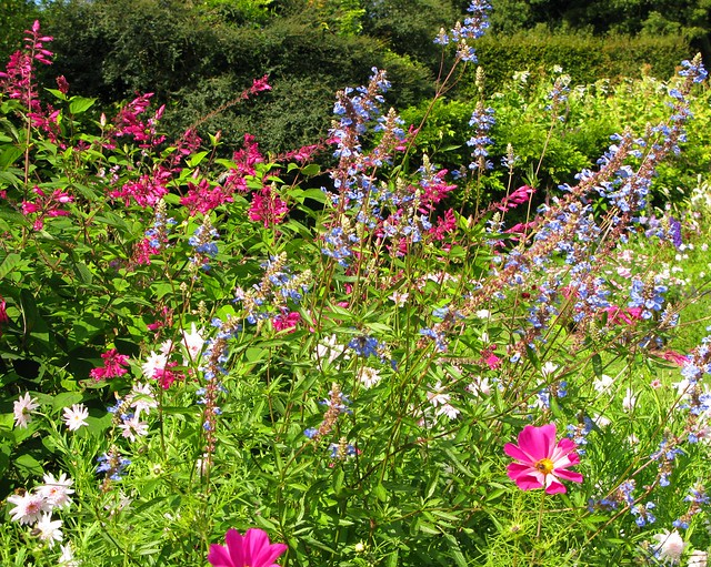 Coleton Fishacre: garden border