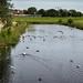 Waterfowl like the Gamlebyen moat