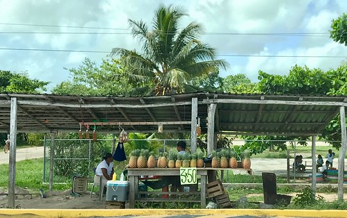 Pineapple Vendors along the road to site. From History Comes Alive at the Chacchoben Ruins Near Puerto Costa Maya