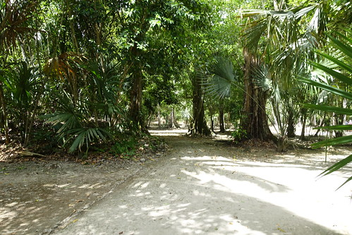 Pathway through the jungle. From History Comes Alive at the Chacchoben Ruins Near Puerto Costa Maya