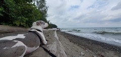 Juneau at the beach in Lake Erie Bluffs