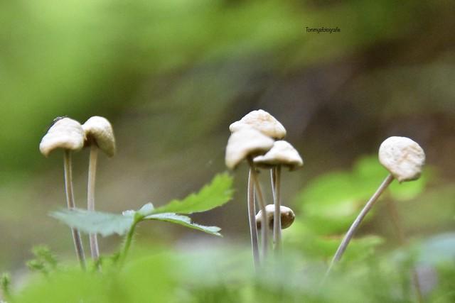 Little elegant mushrooms