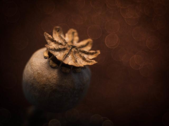 A Crown of Nine