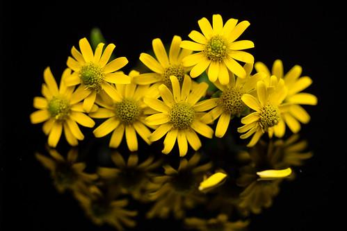 9 tiny daisies
