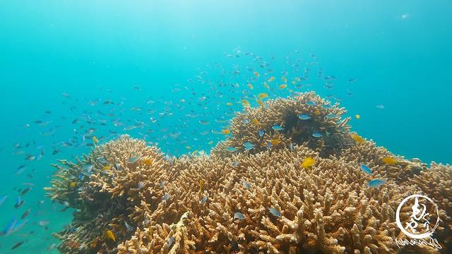 珊瑚があると小魚も群れて最高です。