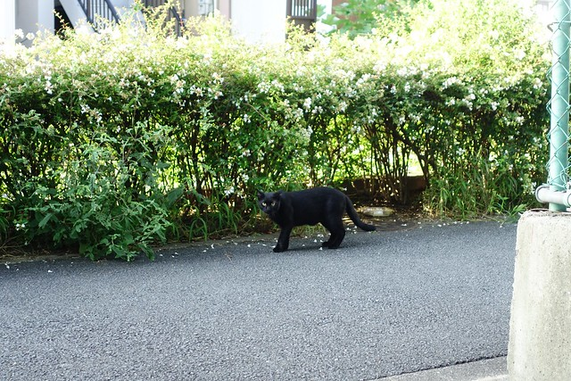 Today's Cat@2019-09-09