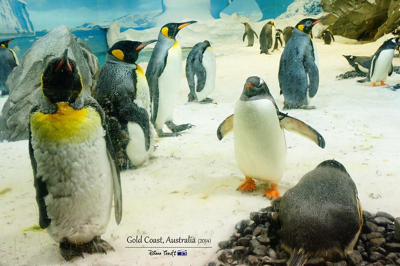 Gold Coast Sea World 12