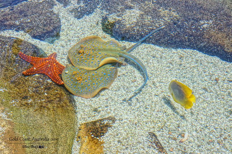 Gold Coast Sea World 09