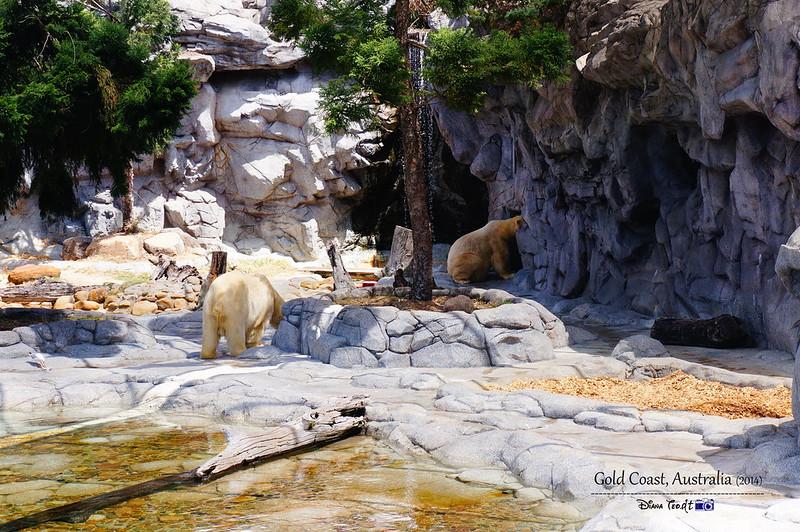 Gold Coast Sea World 11