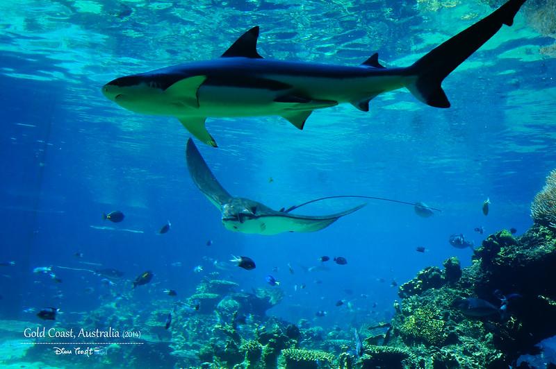 Gold Coast Sea World 10