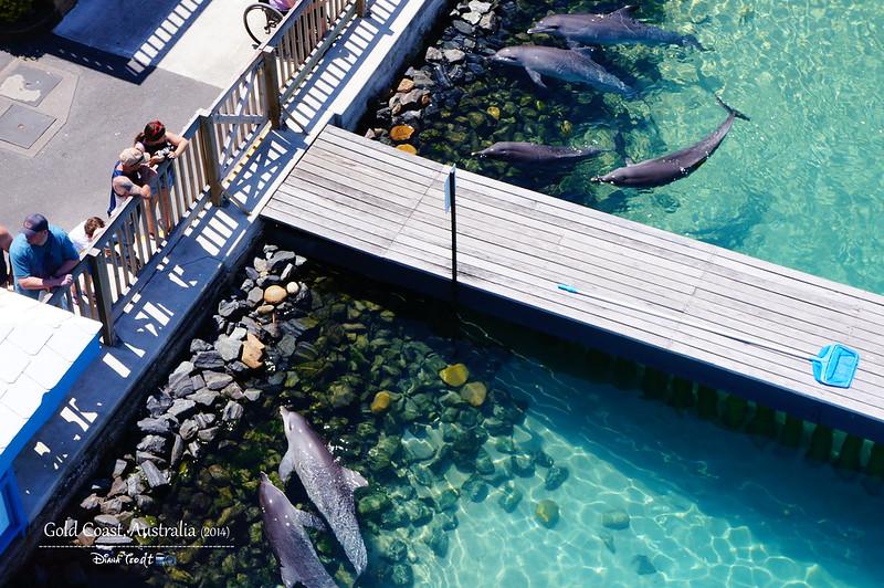 Gold Coast Sea World 04
