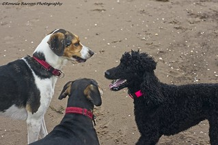 Canine conference