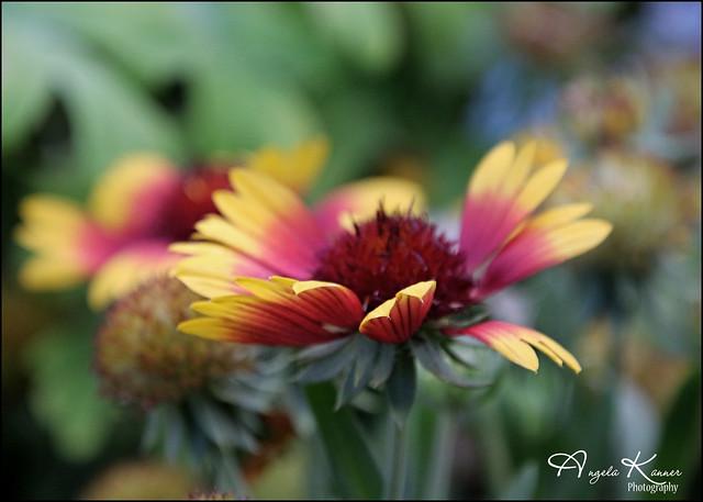 Garden Flowers...