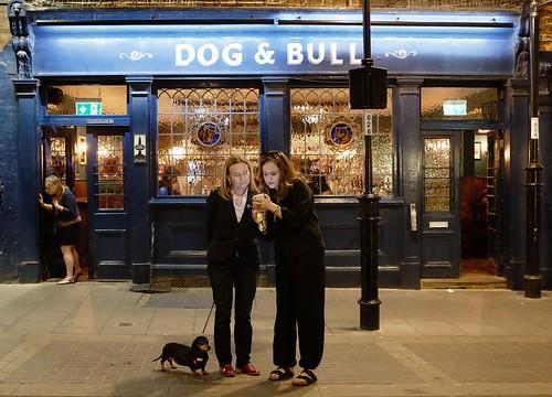 Dog & Bull & Dog &Croydon&
