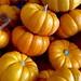 Fall hits Trader Joe's...
