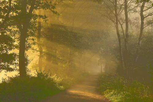 whitegate uk misty cheshire sunrise green path autumn