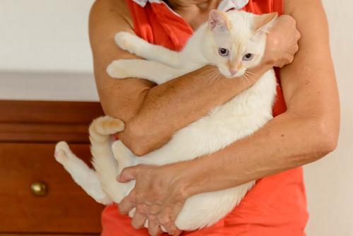 Karnak, gatito siamés Red Point locuelo y dulzón esterilizado, nacido en Marzo´19, en adopción. Valencia. 48707910883_c06bf3d0cd
