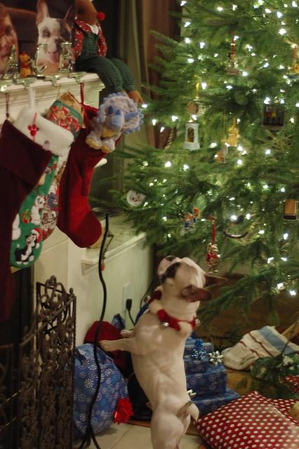 ChristmasEve2011-4849