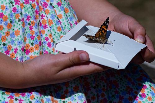 Butterfly release-29