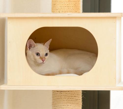 Karnak, gatito siamés Red Point locuelo y dulzón esterilizado, nacido en Marzo´19, en adopción. Valencia. 48708408512_a53a4921b4