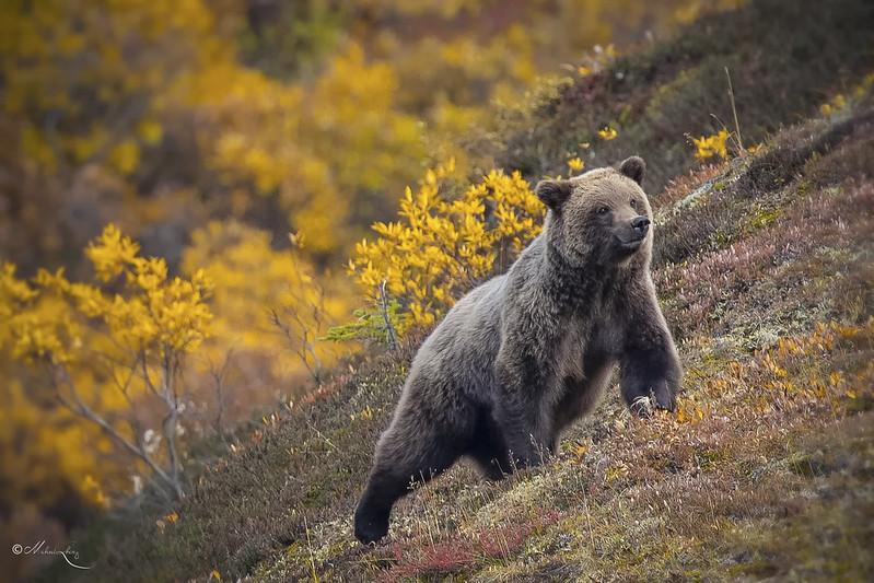 Fall in Alaska #3