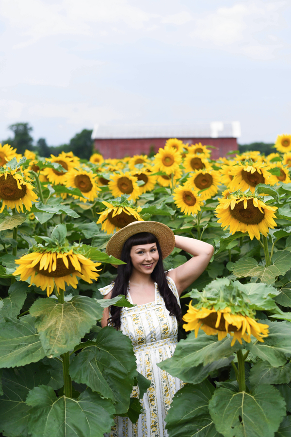 sunflowers rochester