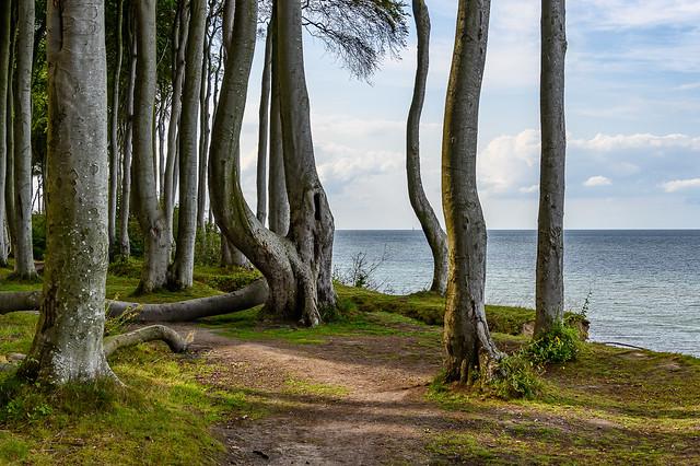 Ostsee - Der Kleine Wohld bei Heiligendamm 5409
