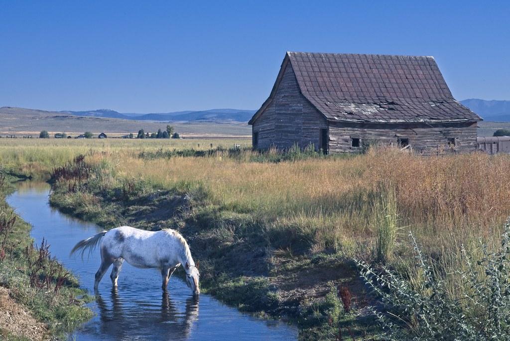 Horse Drinking in Creek 6949 B
