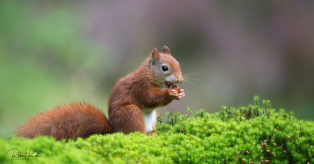The nut collector (1)!