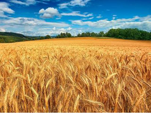 i sapori del grano