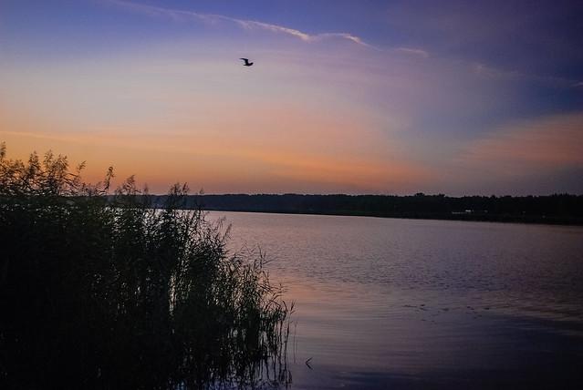перед рассветом на реке Лиелупе.