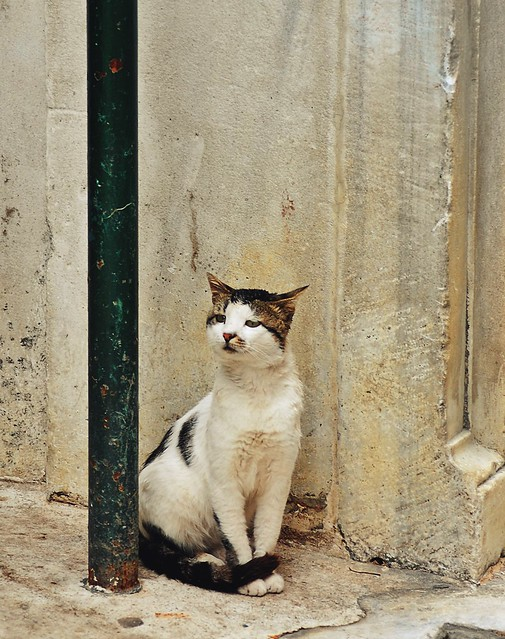 20110811 The cats of Istanbul I