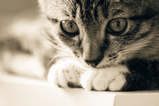 小隻仔|Cat