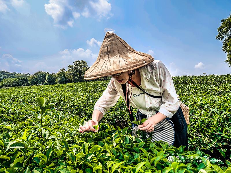 miaoli-tea-25