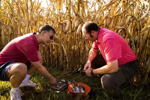 corn sensors17