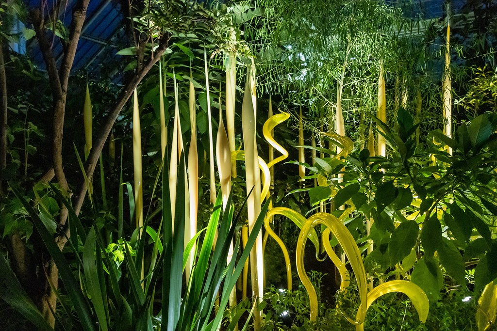 Dale Chihuly's Yellow Herons  and Reeds
