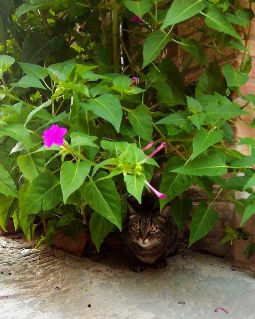 The cat playing hide and seek 🐱🌺 . . . #like #follow #share #comment #subscribe #castelnuovodellabate #montalcino #borghettomontalcino #tuscany #tuscanygram #italy #italy #italia #santantimo #valdorcia #travel #travelblogger #travelphotograph