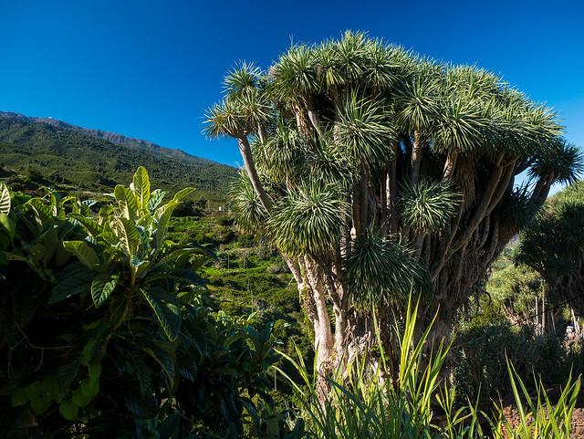 La Palma, Isla Verde