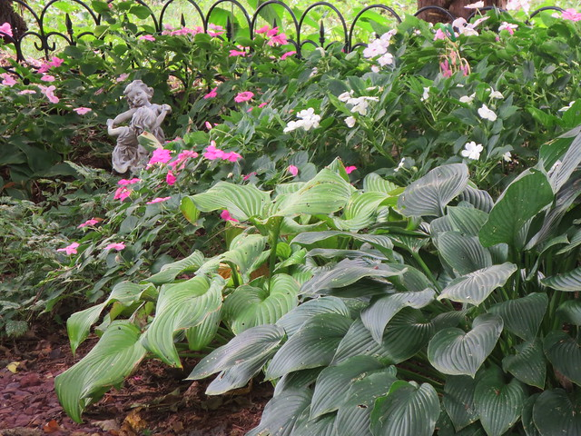 IMPATIENS AND HOSTA LOVED THIS RAINY SUMMER. THEY ALSO LIKE THE SHADE.