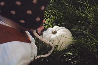 First encounter with a pumpkin