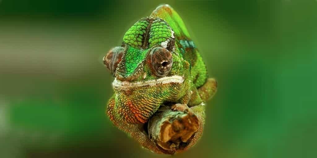encre-change-de-couleur-comme-les-caméléons