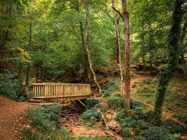 Puisque vous aimez les bois............Petit retour en Auvergne