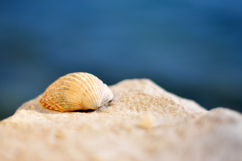 Seashell by the water