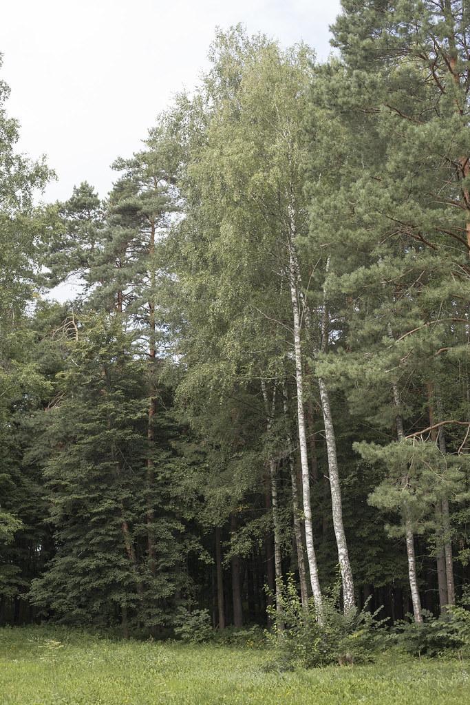 Деревья_1